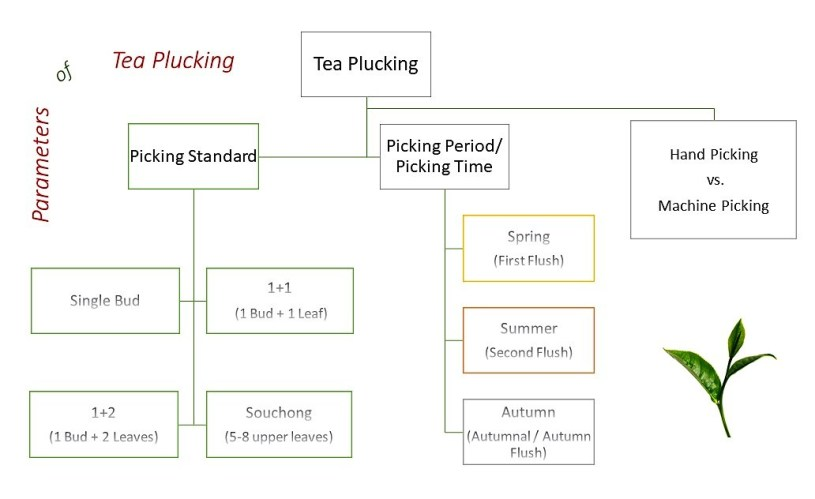 Parameters of tea plucking : picking standard, picking period and time, hand picking versus machine picking