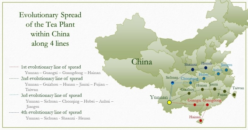Evolutionary spread of the tea plant along 4 lines from Yunnan across southern China - Map