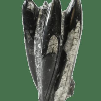 Orthoceras sculpture front