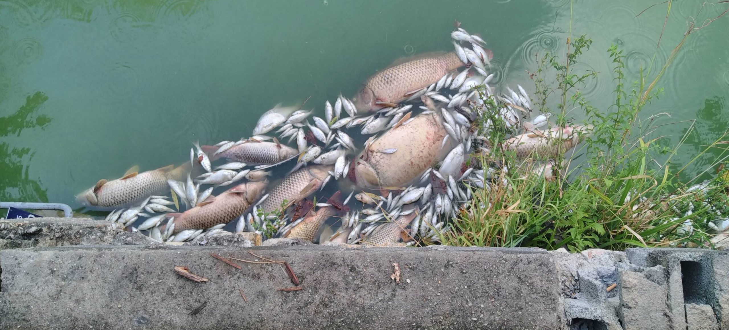Photos de poissons morts
