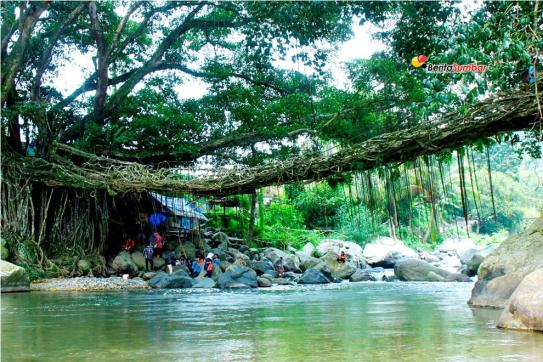 Obyek wisata Jembatan Akar di Kenagarian Puluik-Puluik, Kecamatan Bayang, Kabupaten Pesisir Selatan, Sumatera Barat. Foto: Riko Coubout