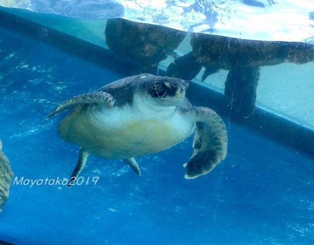 ウミガメの写真1