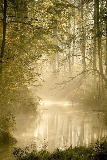 swamp-pic
