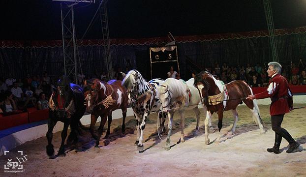 cirkus safari9