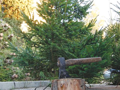bozicna drvca3-josipa181214