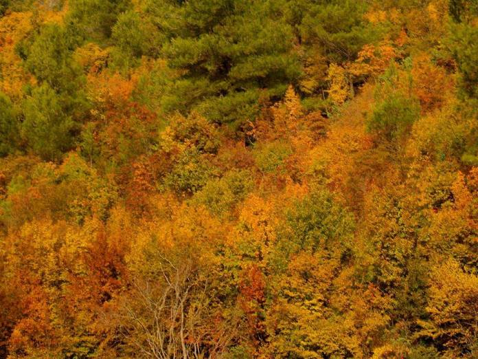 jesen np krka