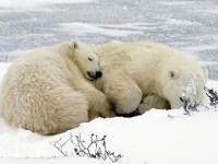 Tüm kışı dinlenerek geçirme, BGA kış kampını kaçırma!