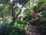 Garden paths for walking meditation