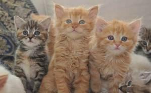 Kitten2-12-15