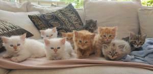 Kitten2015