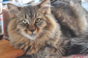 Kywy's Achilles - aka Tiger
