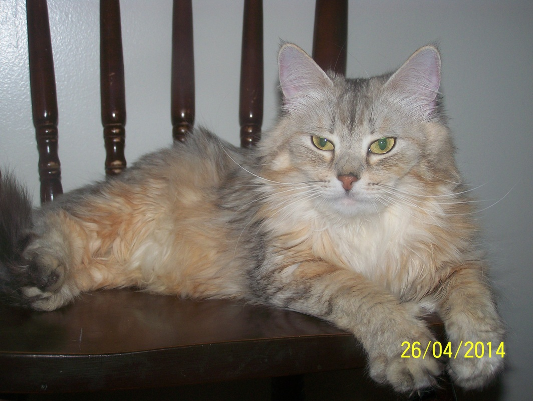 Our Ladies Siberian Gold Siberian Forest And Neva