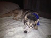 quinn in glasses