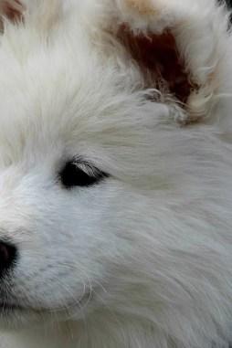 dog-2573620_1920