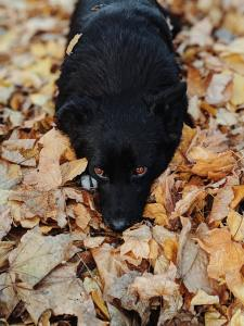 black fluffy dog