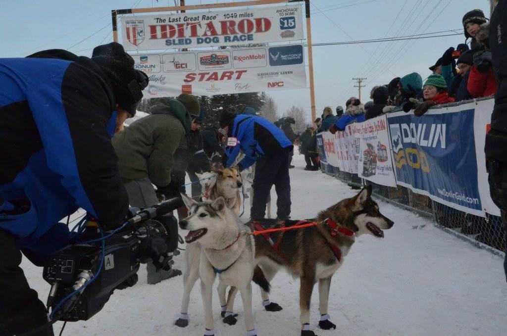 Snuppa giving pre-race interviews. Photo Jana Henychova