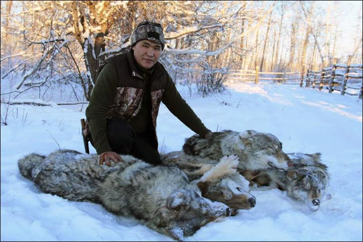 hunter with wolves