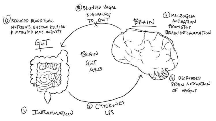 Brain Gut Axis art