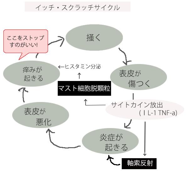 イッチ・スクラッチサイクル