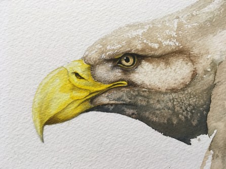 Karl Mårtens, detail of the face of an eagle