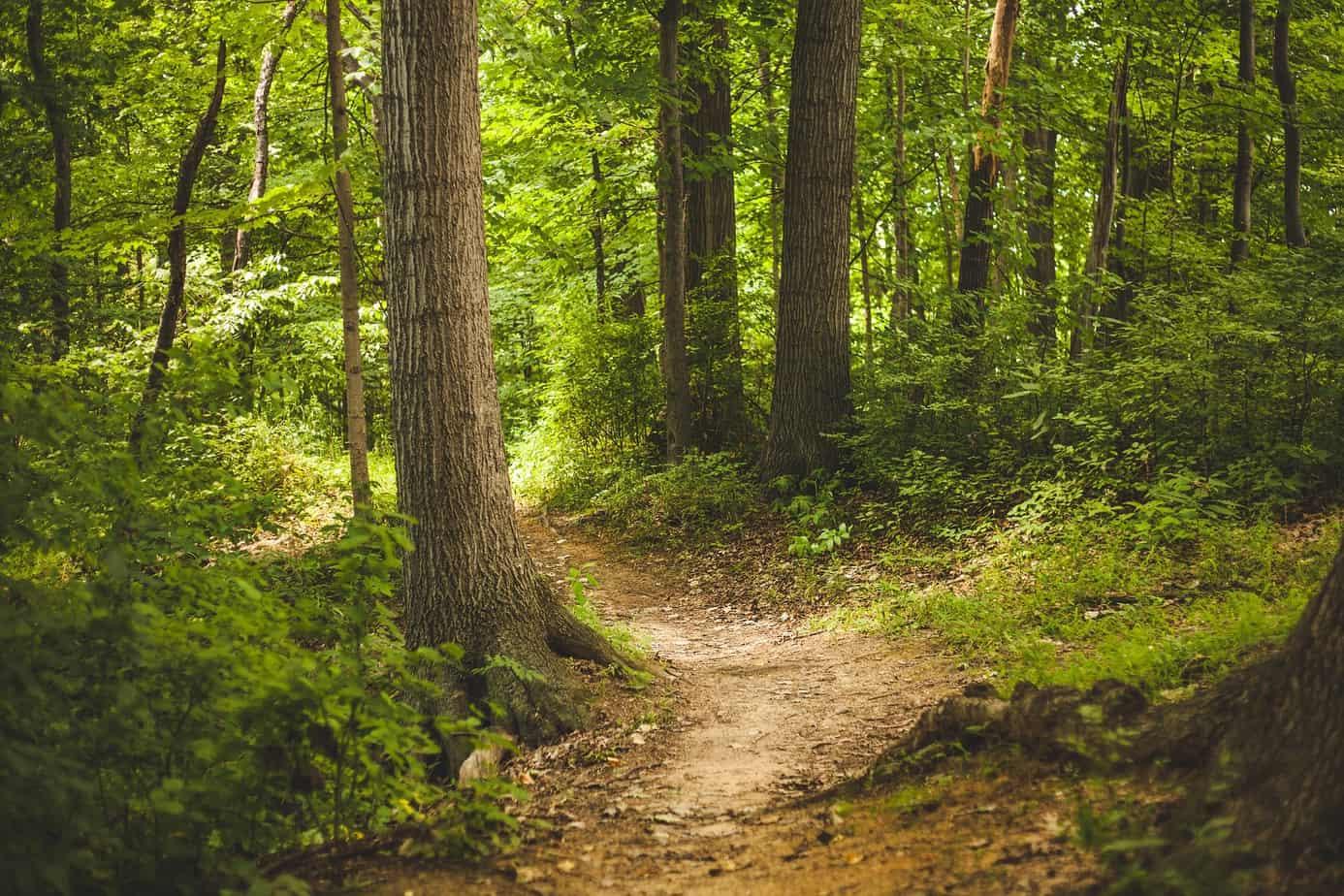 Im Wald Kraft schöpfen
