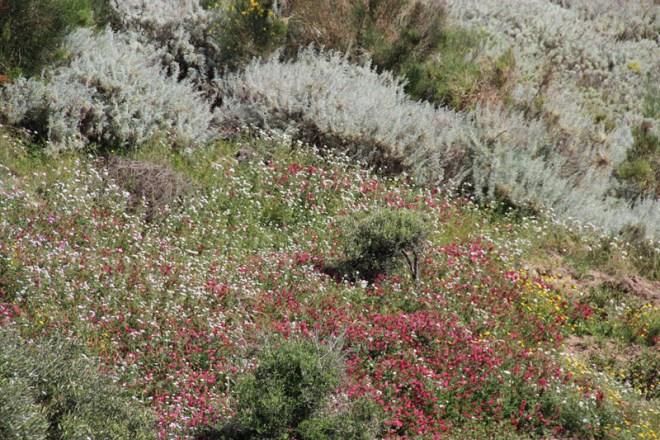Le printemps à San Calogero, Lipari