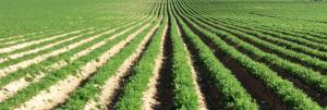 Agricoltura biologica 2
