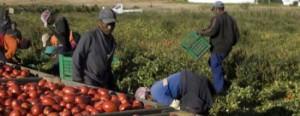 lavoratori_immigrati_agricoltura_campagna