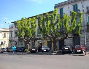 Alberi potati via Tommaso Cannizzaro 2