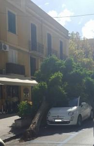Uno dei tanti alberi crollati in città