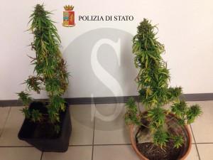 Polizia Ragusa Modica piante cannabis marijuana