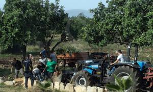 Scicli campaga agrario (1)