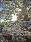 naturexperience con grande albero nel bosco