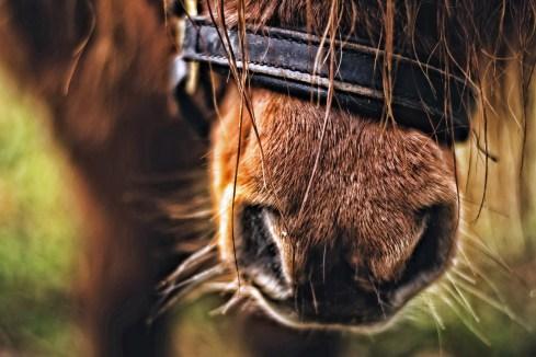 primo piano nari di un cavallo