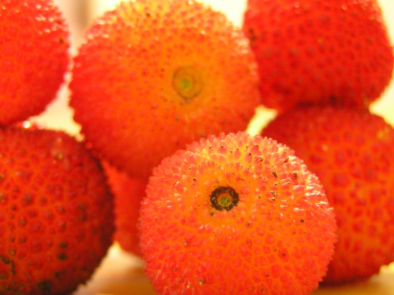 Friday Pic: Funky winter fruit
