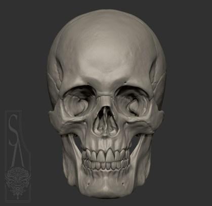 Male European skull
