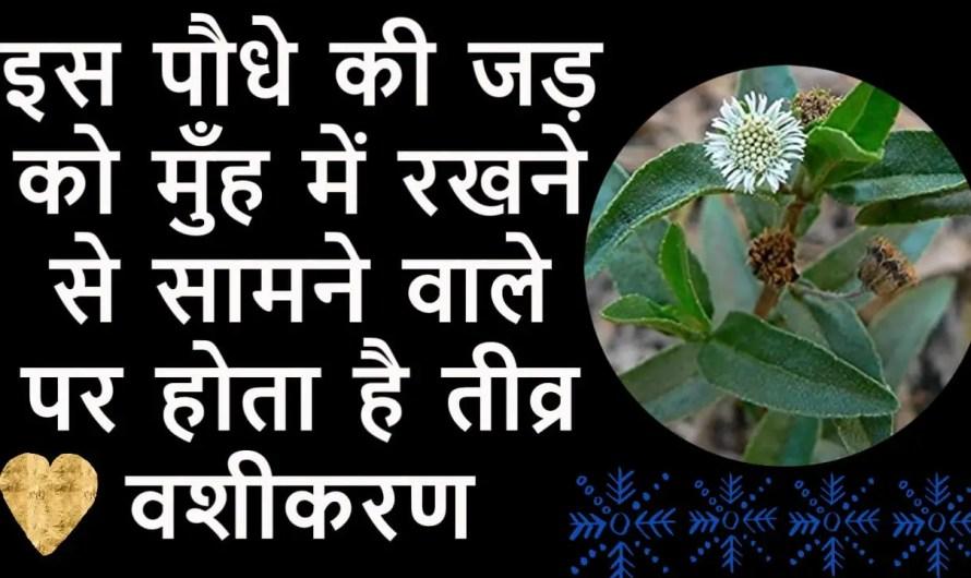 सिर्फ इस पौधे की जड़ को मुँह में रखने से होता है तीव्र वशीकरण.