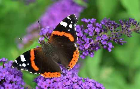 butterfly - metamorphosis - blogging anonymously
