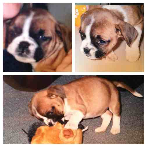 Snoopy puppy collage - Save on Vet Bills - Pet Insurance