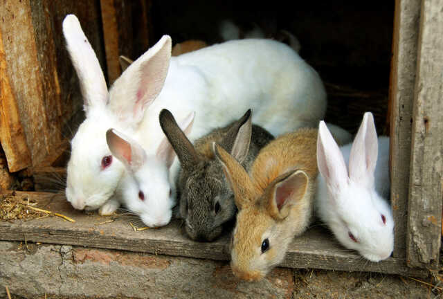 sweet bunny rabbits family