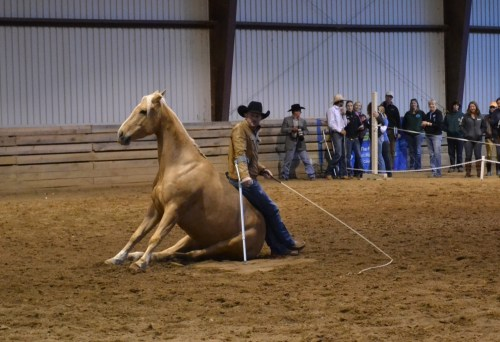 Dan James captivated the audience with his accent, his training skills and his ability to use his horse as a comfy chair.