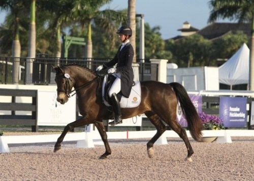 Gideon, competed by JJ Tate, is owned by breeder Pam Liddell.