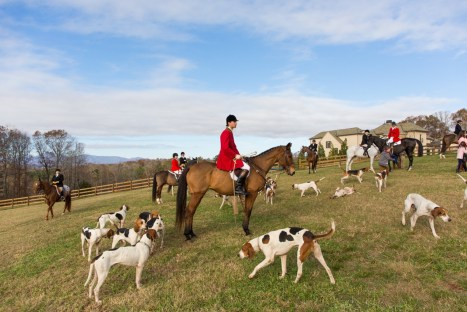 Trey Bennet, huntsman of the Tryon Hounds Photo by Don West Photography