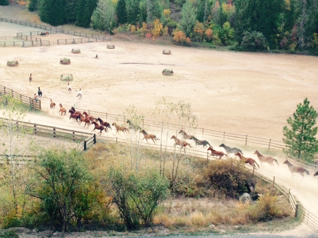 The horses at Red Horse Mountain Ranch Photo by Jan Westmark