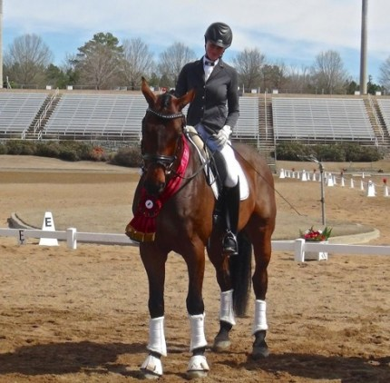Clever, bred by Stephanie, won the Holsteiner Award at his very first show. Photo courtesy of Stephanie Hartigan