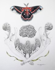 "Erin Gergen Halls, ""The Hushed Beat of a Dark Forest Wing"", 12"" x 9"", graphite and colored pencil on Bristol, $750.00"