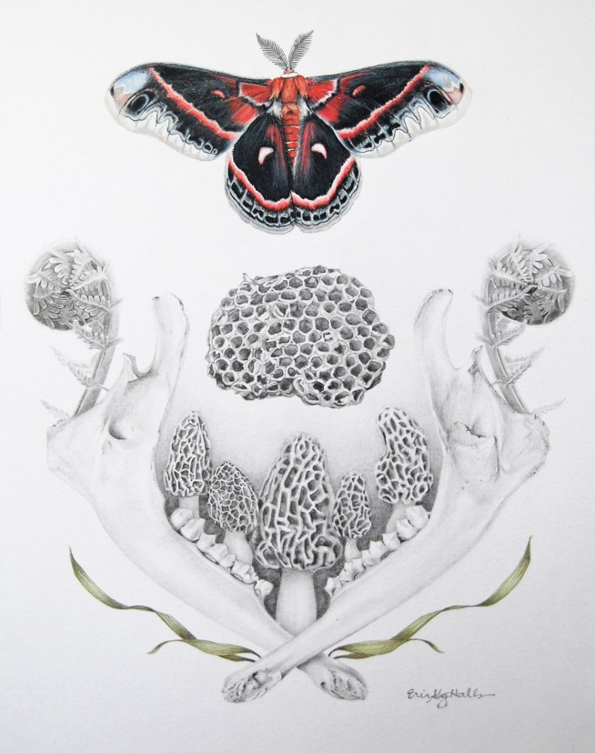 """Erin Gergen Halls, """"The Hushed Beat of a Dark Forest Wing"""", 12"""" x 9"""", graphite and colored pencil on Bristol, $750.00"""
