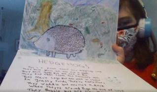 Annabelle - hedgehog