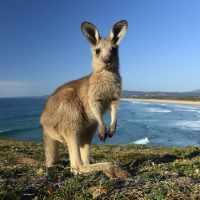 Китай наносит ответный удар по Австралии.