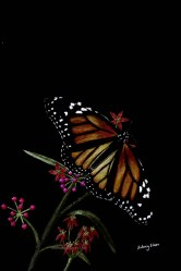Title: Butterfly, Artist: Sidney Eileen, Medium: colored pencil on black paper